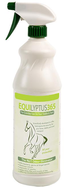 Equilyptus365